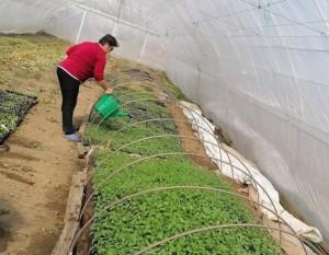 cristina gradina bio watering